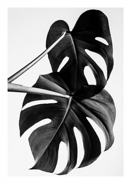 Monstera B&W Two Poster in the group Prints / Sizes / 50x70cm | 20x28 at Desenio AB (8973)