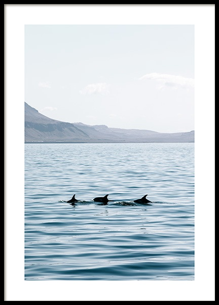 Dolphin Backs Poster in the group Prints / Photographs at Desenio AB (co0045)