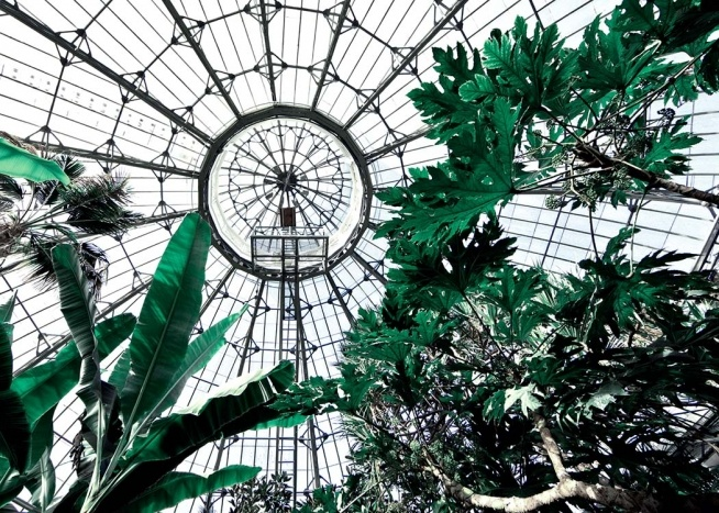 - Photo of a botanical greenhouse with all types of tropical plants.