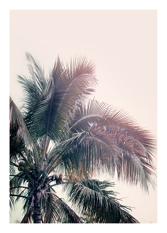 a palm tree dream poster