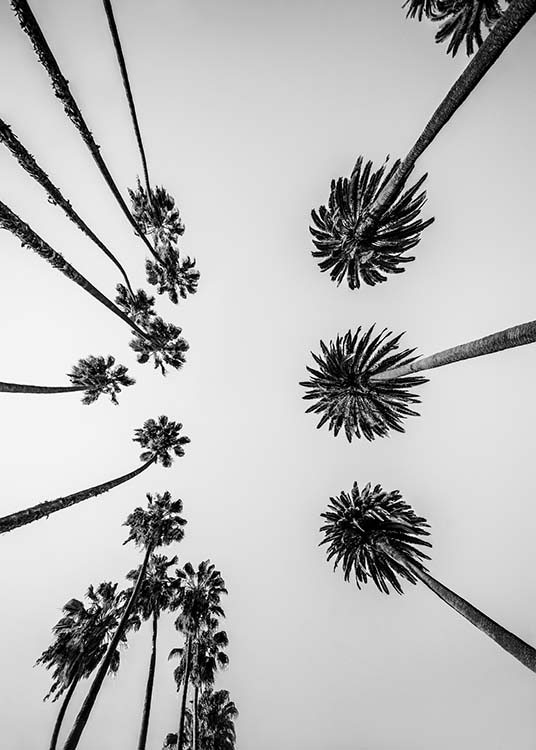 Palm Trees Above Poster / Black & white at Desenio AB (10234)
