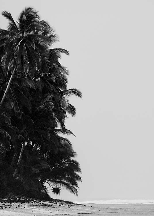 - Beautiful photo poster with palm trees on the beach of a secluded bay in black and white.