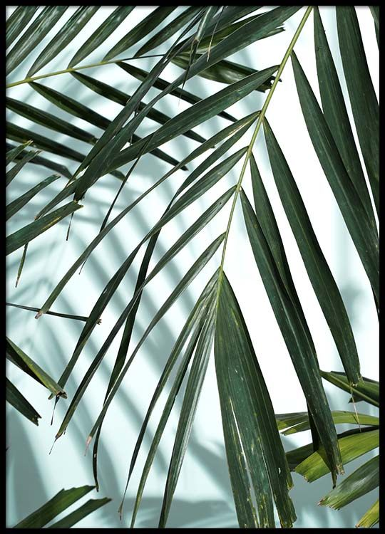 Palm Leaves Shadow No1 Poster