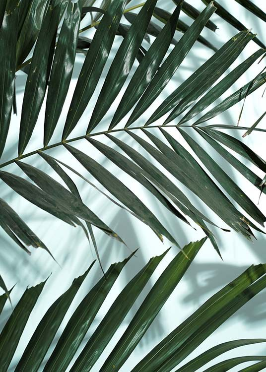 - Botanical poster with dark-green palm leaves on a white background.