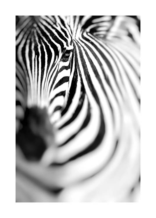 Zebra Portrait Poster / Black & white at Desenio AB (10400)