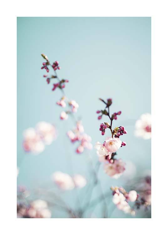 Cherry Blossom No2 Poster / Photographs at Desenio AB (10427)