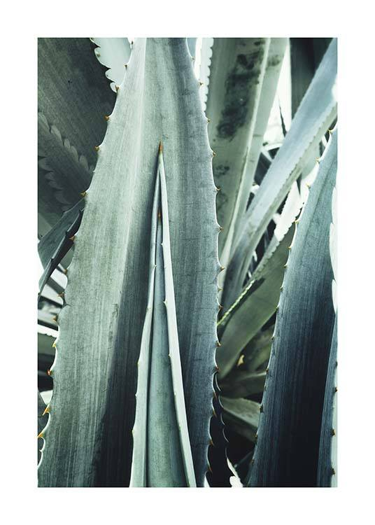 Agave Close Up Poster / Photographs at Desenio AB (10430)