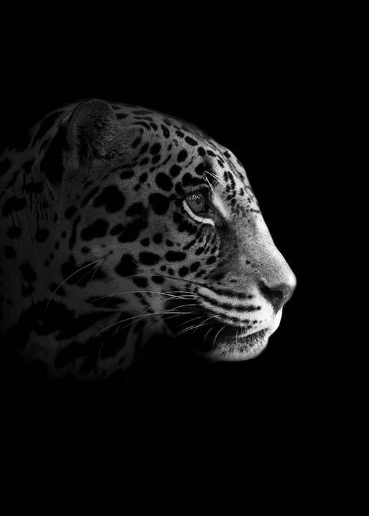 - Black and white animal photo of a leopard's head from the side.
