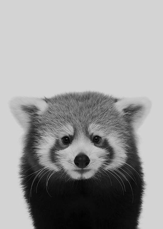 - Cut animal poster of a red panda in black and white on a grey background.