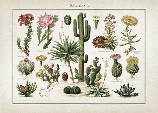- Stylish retro poster with a list of various different types of cactus, some even with blossoms.