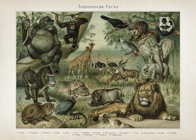 - Retro poster with a collection of Africa's exotic wildlife including lions, elephants and hippos.