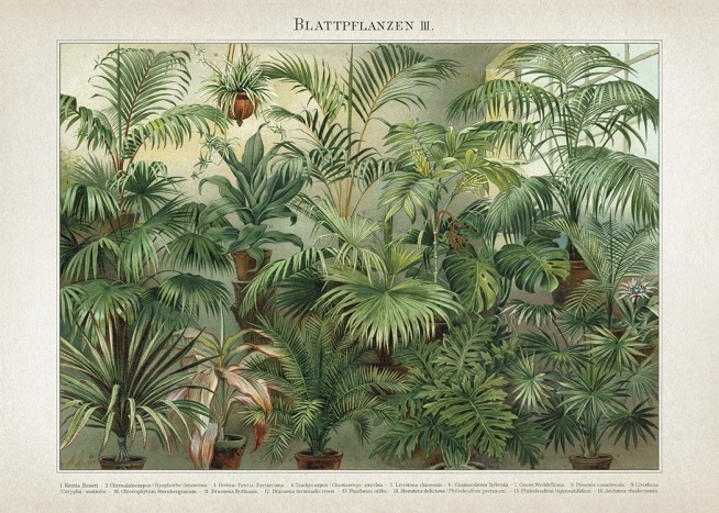 - Vintage poster with a collection of various exotic leafy plants.