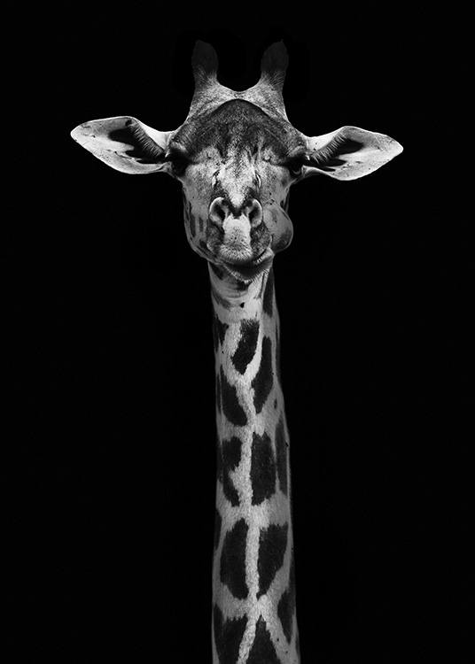 Giraffe on Black Poster / Black & white at Desenio AB (10619)