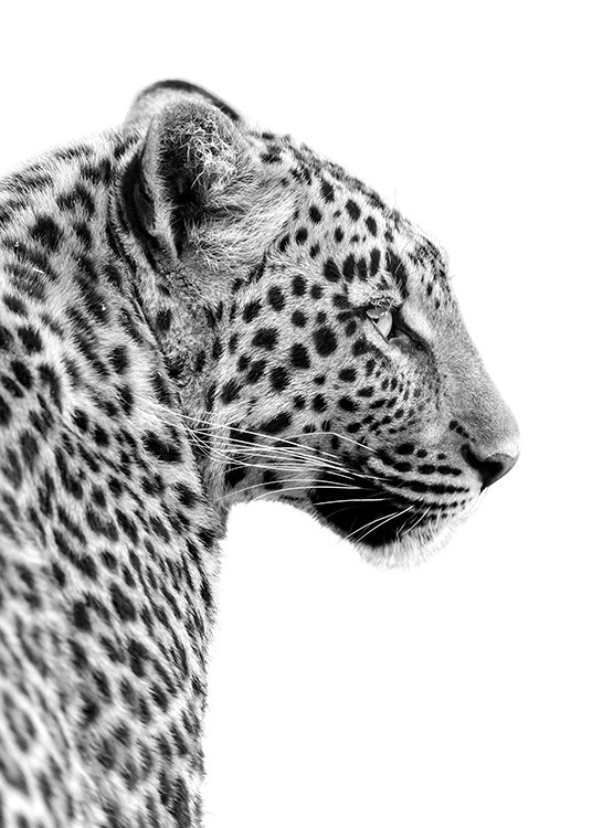 - Black and white animal photo poster of a leopard's head from the side.