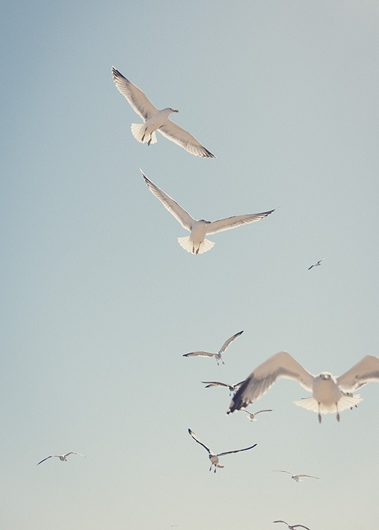 - Beautiful photo poster with screeching seagulls and a clear blue sky