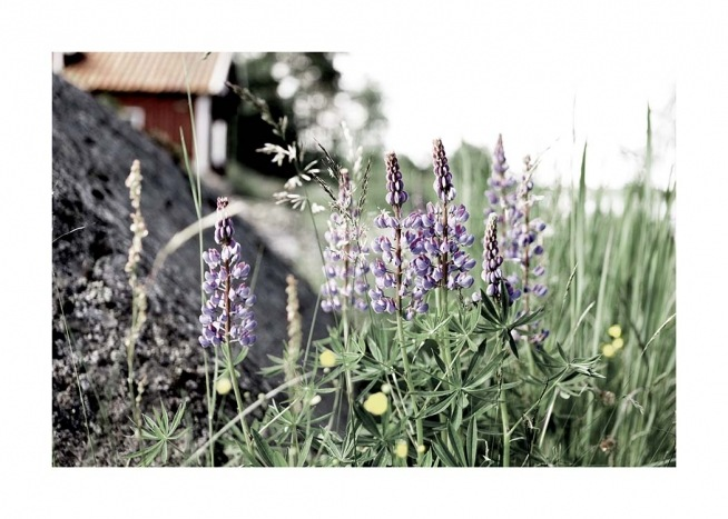 Flowering Lupines Poster / Nature prints at Desenio AB (10707)
