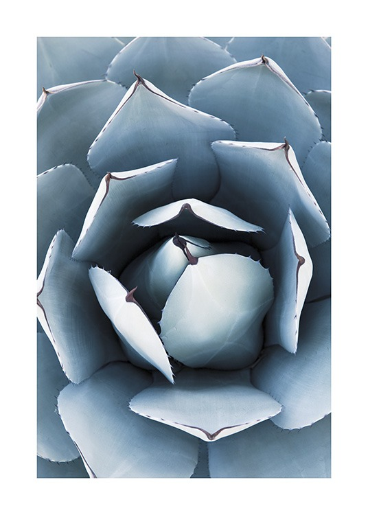 Blue Agave No1 Poster / Photographs at Desenio AB (10829)
