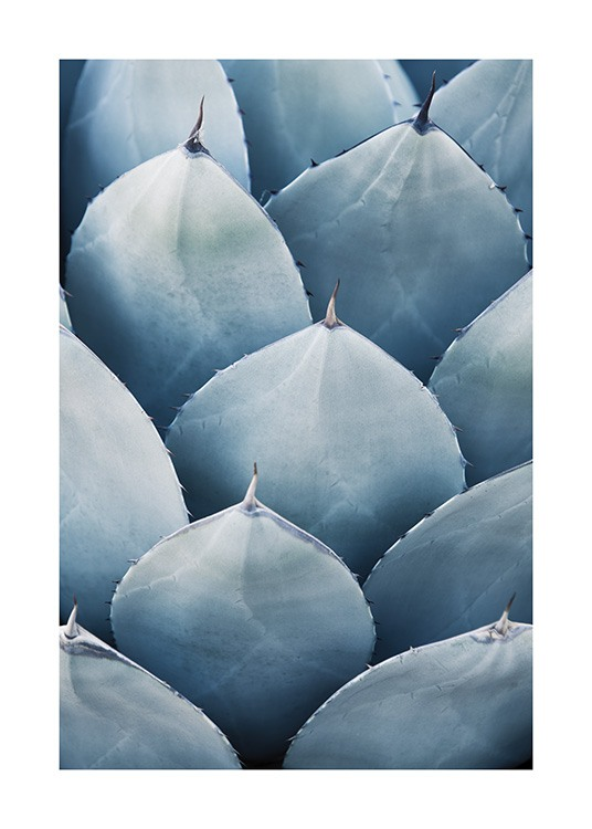 Blue Agave No3 Poster / Photographs at Desenio AB (10831)