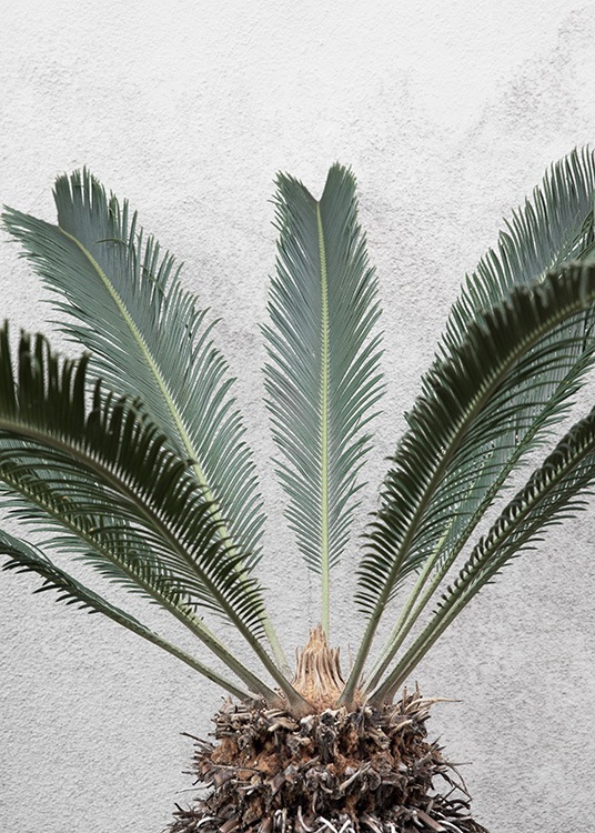 - Stylish botanical poster with a pineapple palm with leaves and a stump as the motif.