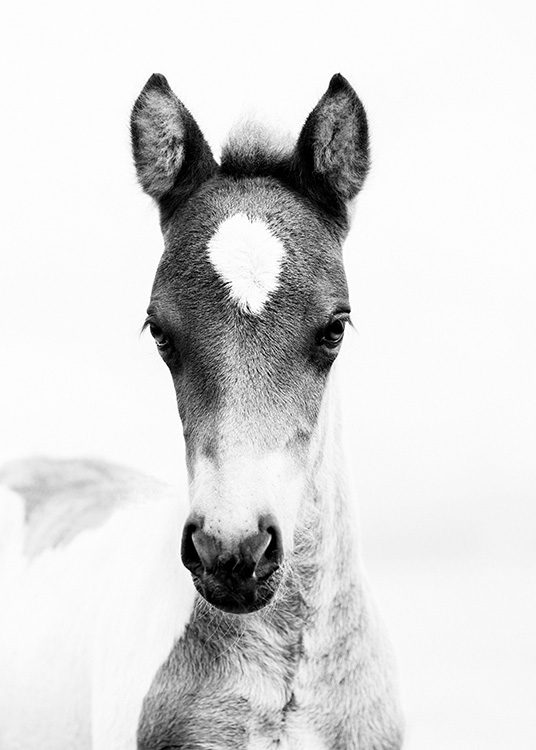 - Animal photo of a young foal in black and white.