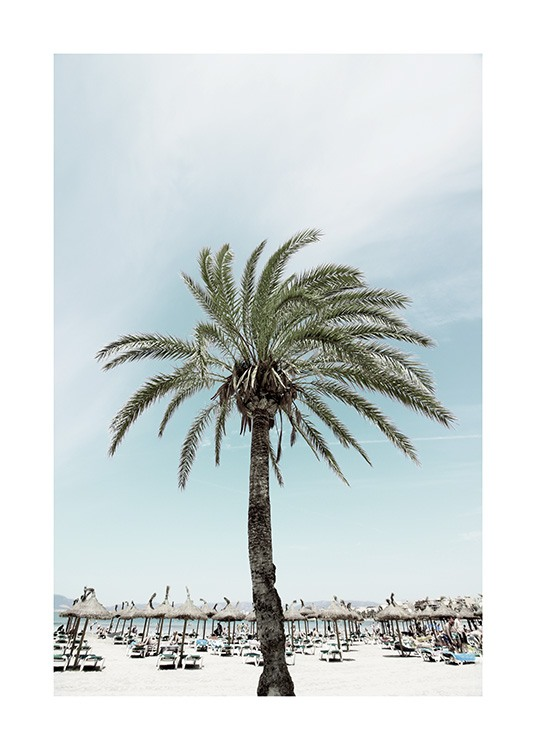 Sunbeds and Palm Tree Poster / Nature prints at Desenio AB (10893)
