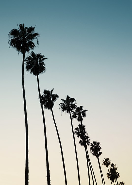 - Beautiful photo poster showing a row of palm trees and a cloudless sunset.