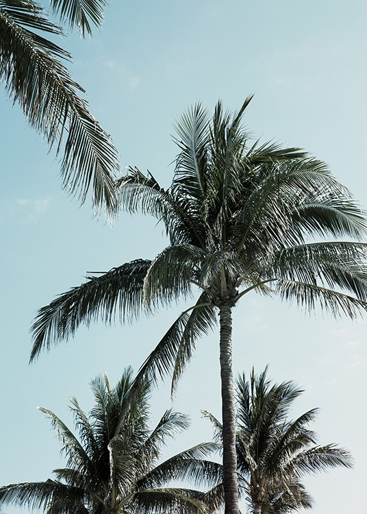 - Botanical poster with tropical palms and a blue sky in the background.