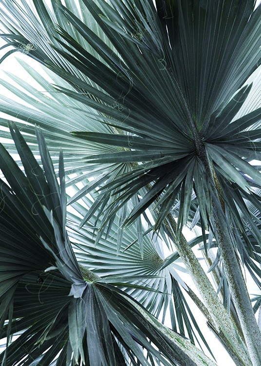 - Photo poster with a motif of palm leaves in mint green.