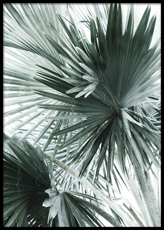tropical palm leaves no2 poster