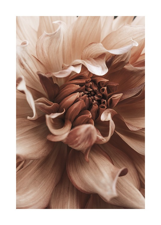 Earth Flower Poster / Photographs at Desenio AB (10998)