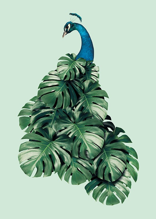 - Modern photo art with a bird motif whose plumage consists of Monstera leaves.