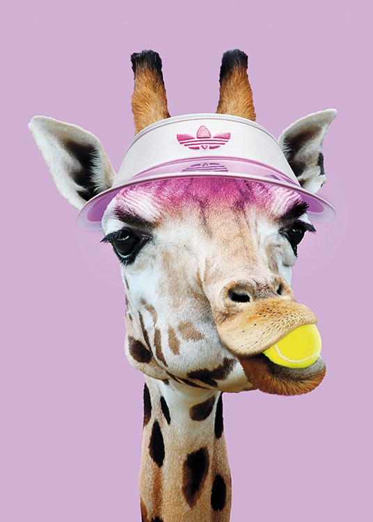- Funny photo poster of a giraffe wearing a tennis outfit with a tennis ball in its mouth.