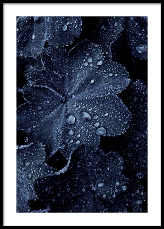 raindrops on blue leaves poster
