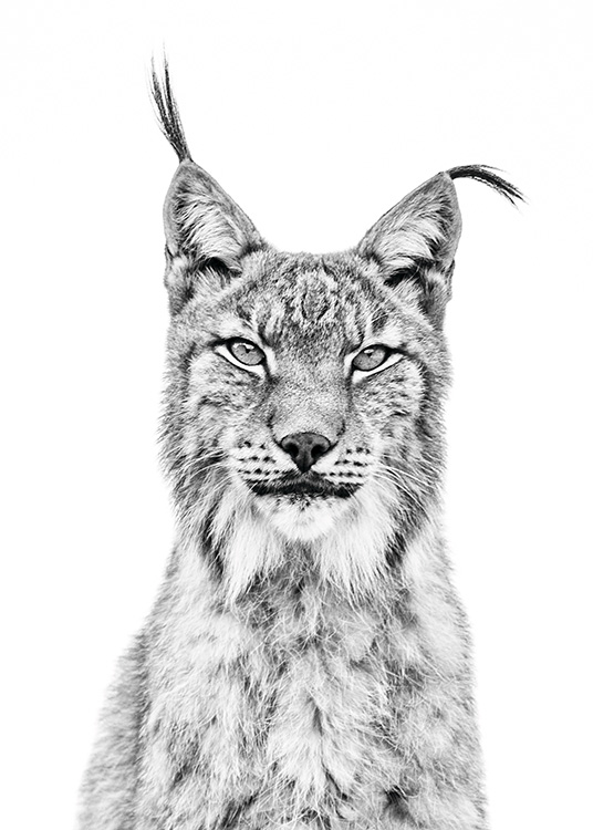 - Impressive black and white animal poster with a lynx portrait.