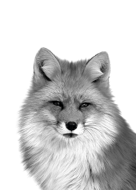 - Black and white animal poster with a fox portrait.