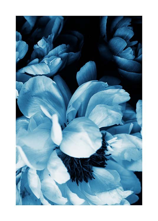 Blue Peony No1 Poster / Photographs at Desenio AB (11778)