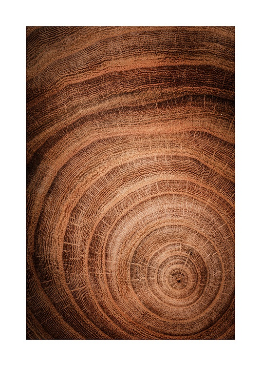 Growth Rings Poster / Nature prints at Desenio AB (11873)