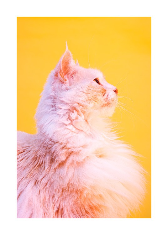 Pink Cat Poster / Photographs at Desenio AB (12227)