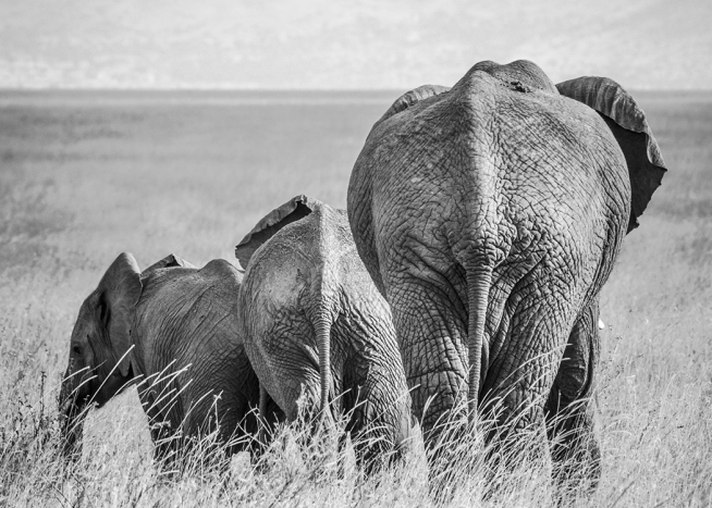 Elephant Family Poster / Black & white at Desenio AB (12305)