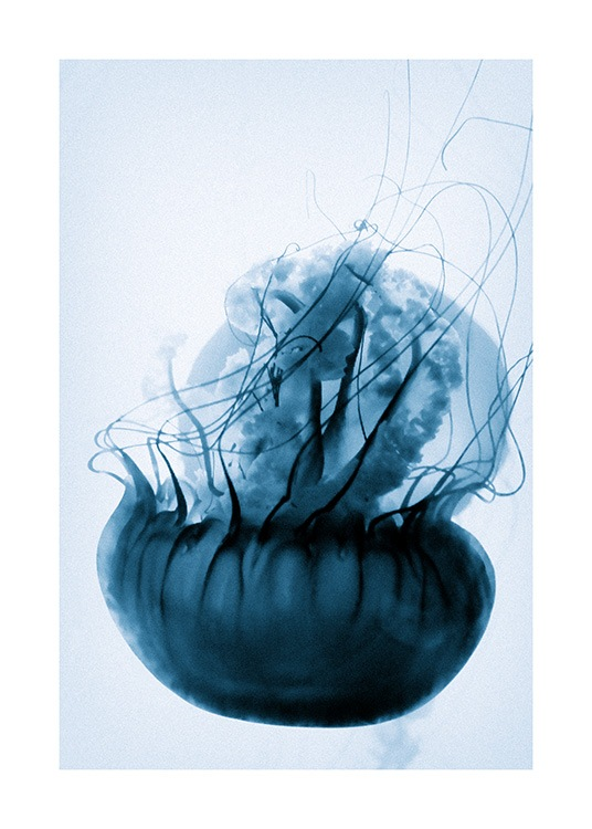 Floating Blue Jellyfish Poster / Photographs at Desenio AB (12434)