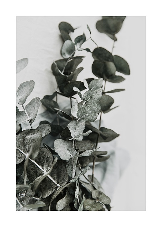 Eucalyptus Bouquet No2 Poster / Photographs at Desenio AB (12582)