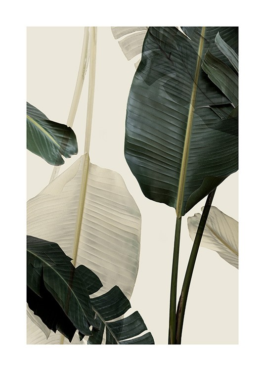 Banana Leaf Shades No1 Poster / Photographs at Desenio AB (12585)