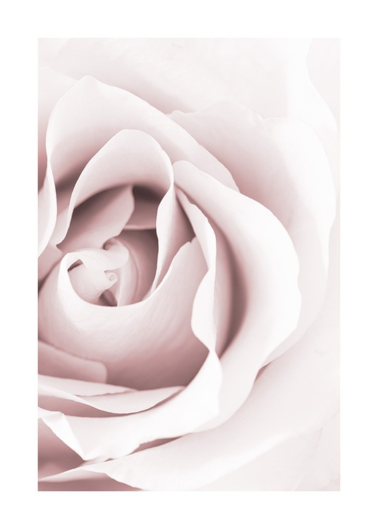 Dreamy Rose Poster / Photographs at Desenio AB (12653)