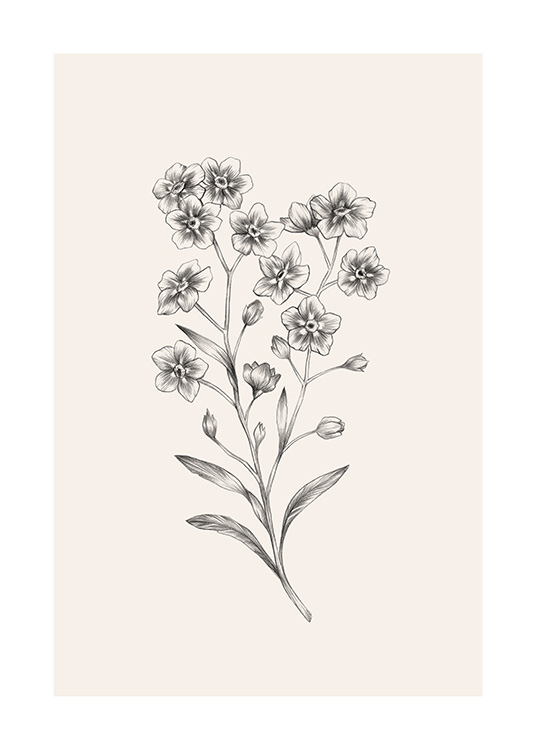 Forget Me Not Sketch Poster / Botanical at Desenio AB (12688)