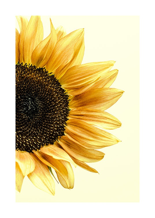 Close-up of an illustrated yellow sunflower with a pale yellow background