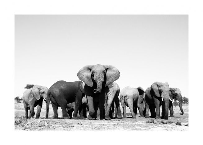 Nature design with a black and white photo of a herd of elephants in the desert
