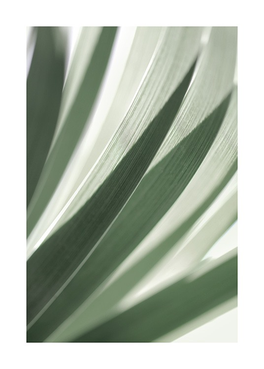 Photograph with botanical green leaf and shadows