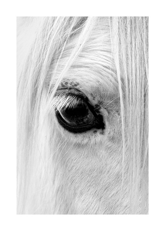 Black and white photograph with close-up of a white horses's eye
