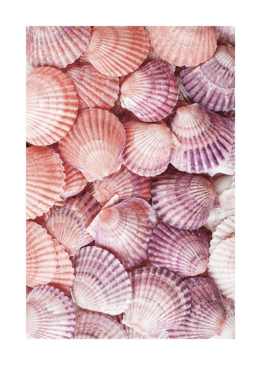 Photograph of seashells in purple and pink laying on top of each other