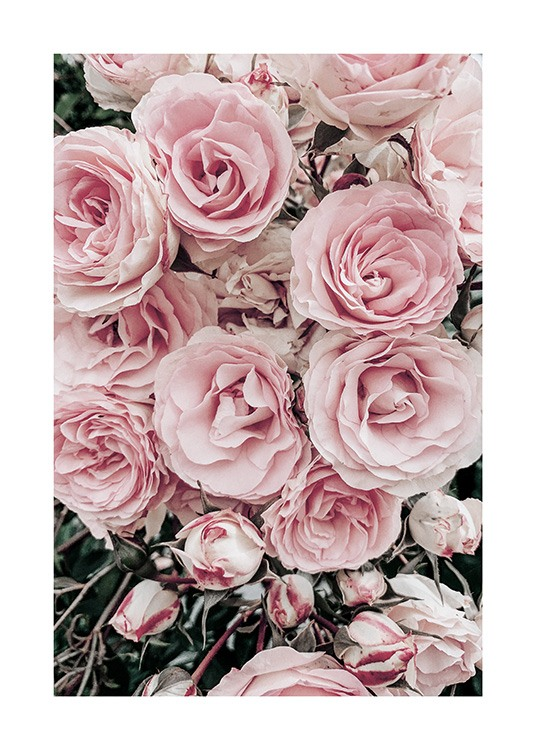 - Photograph of rose bouquet with pastel pink roses and green leaves